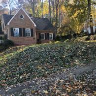 Leaf Removal Before